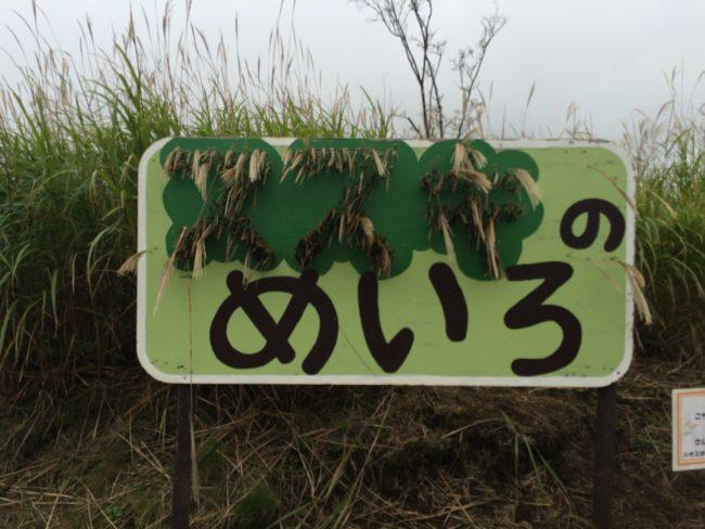 富士山こどもの国すすきの迷路
