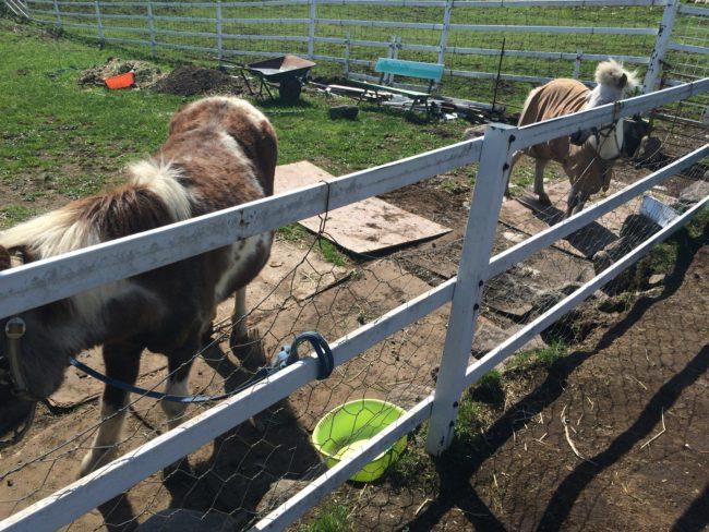 大笹牧場オートキャンプ場馬