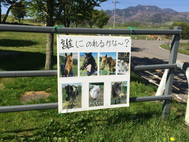 大笹牧場オートキャンプ場乗馬