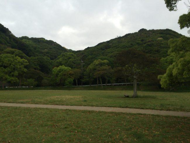 加太オートキャンプ場サイト向かい