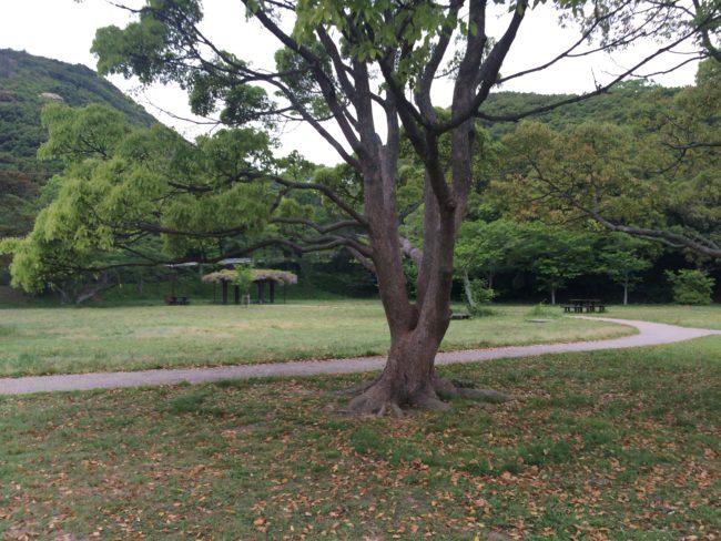 加太オートキャンプ場サイト向かい2