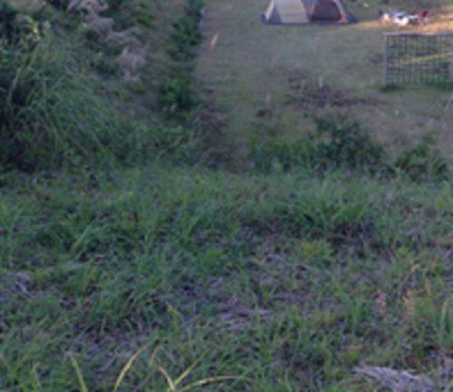 松之山キャンプ場 フリーサイト