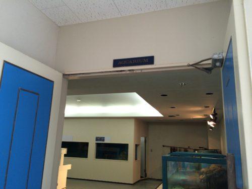 千葉大学海洋バイオシステム研究センター水族館内