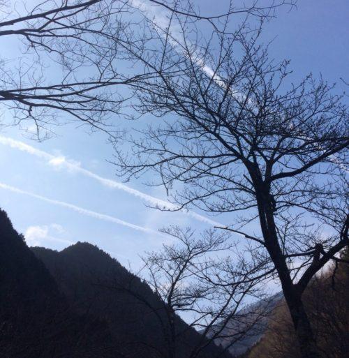神之川キャンプ場 サイトからの眺め写真