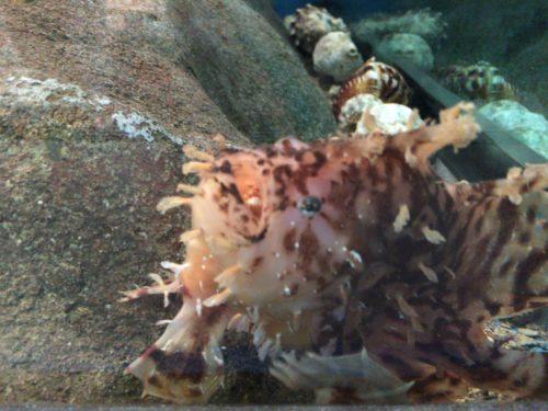 千葉大学海洋バイオシステム研究センター水族館魚たち
