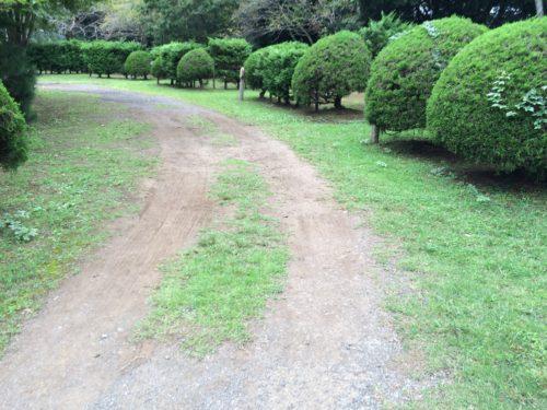 内浦山県民の森オートキャンプ場 サイト