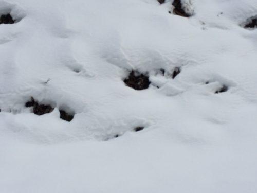 雪中キャンプ (2)