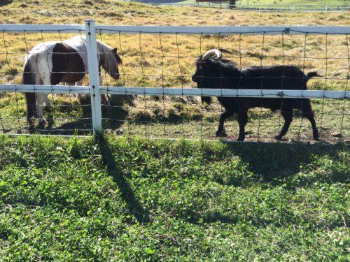 みどりの村キャンプ場牧場の動物