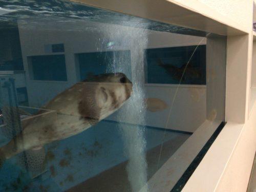 千葉大学海洋バイオシステム研究センター水族館サメ