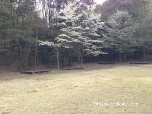 沼津市民の森キャンプ場第一広場サイト駐車場側からサイト内をみた状態