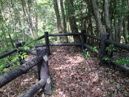 清和県民の森キャンプ場の奥にある森