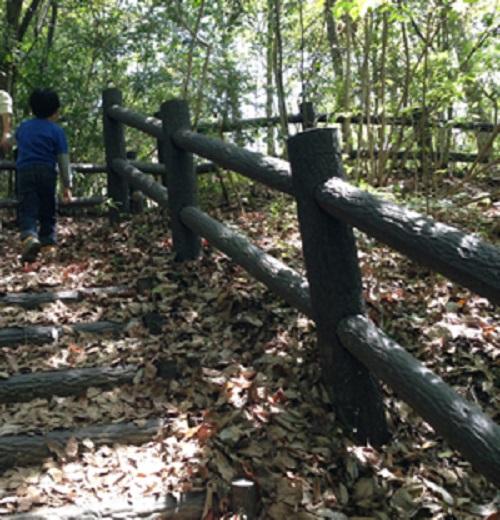 清和県民の森キャンプ場の奥にある森の階段