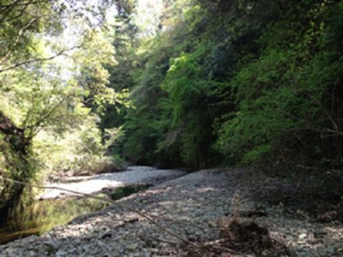 清和県民の森キャンプ場奥にある小川
