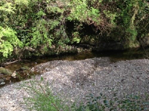 清和県民の森キャンプ場の奥にあるちょっとした川