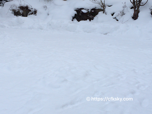 くるみ温泉キャンプ場の雪中キャンプ