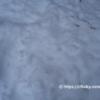 くるみ温泉キャンプ場のサイト内を圧雪作業