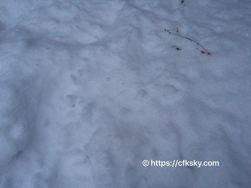 雪中キャンプを豪雪地帯で楽しんだキャンプ (1)