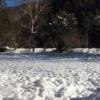 雪中キャンプくるみ温泉キャンプ場