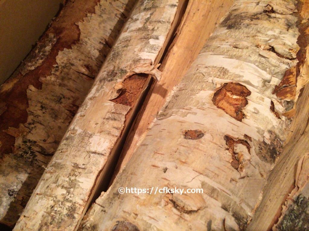 白樺薪の樹皮