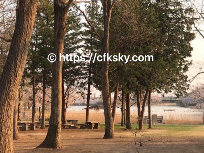 上野沼やすらぎの里キャンプ場の第3オートキャンプ場からみえる上野沼