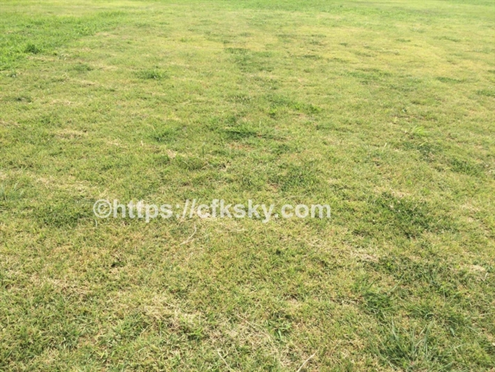 ふじのくに田子の浦みなと公園 は無料で楽しめる絶景スポットの芝生