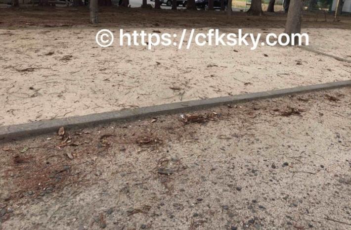 上野沼やすらぎの里キャンプ場第3オートキャンプ場のサイト地面