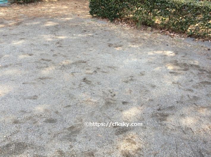 那須野が原公園オートキャンプ場のオートサイトのフィールド状態