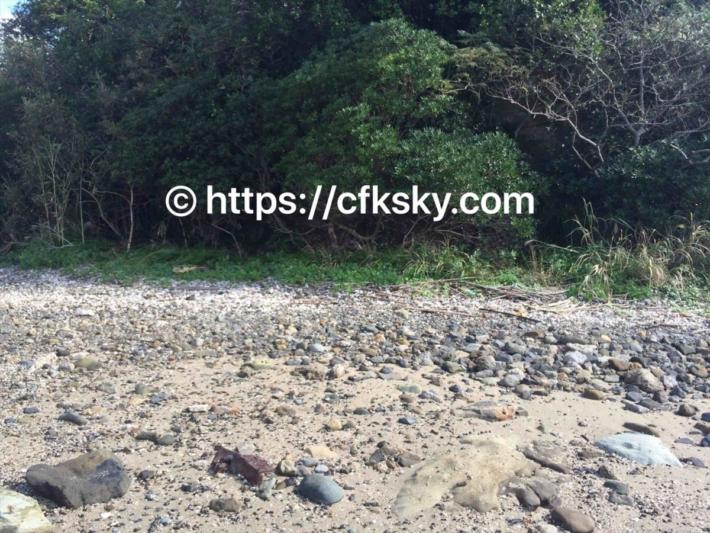弁天島の呼子岩脈群での散歩