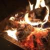 焚き火で楽しむ料理は安くて簡単7分で誰にでも作れるおいしいメニュー