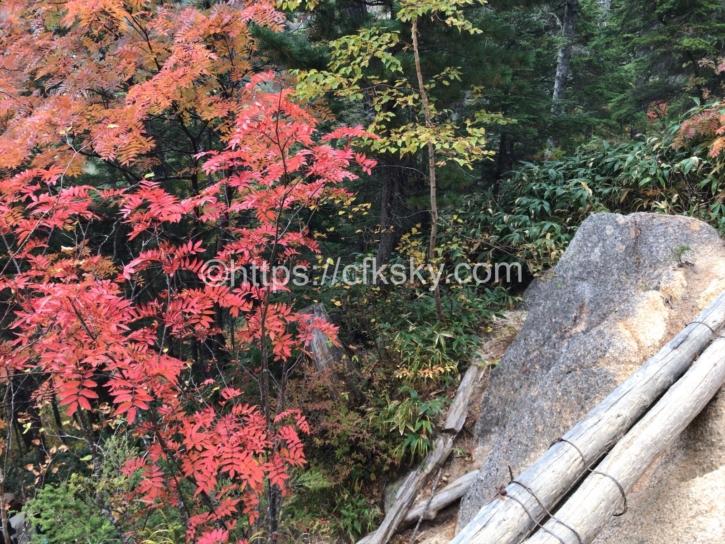 丸太橋のあるところの紅葉