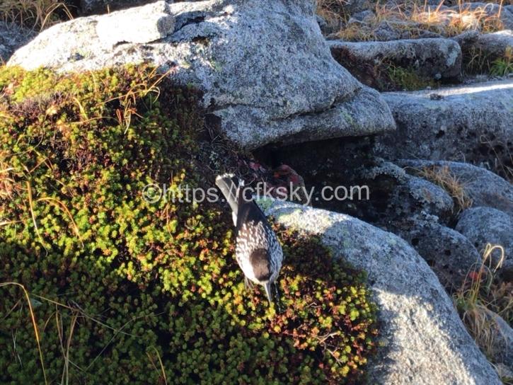 登山途中でみかけた野鳥