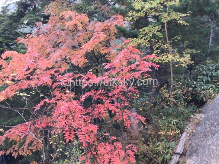 きれいな紅葉と合戦小屋までの道