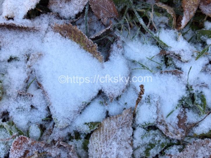 枯葉も凍る氷点下のキャンプ