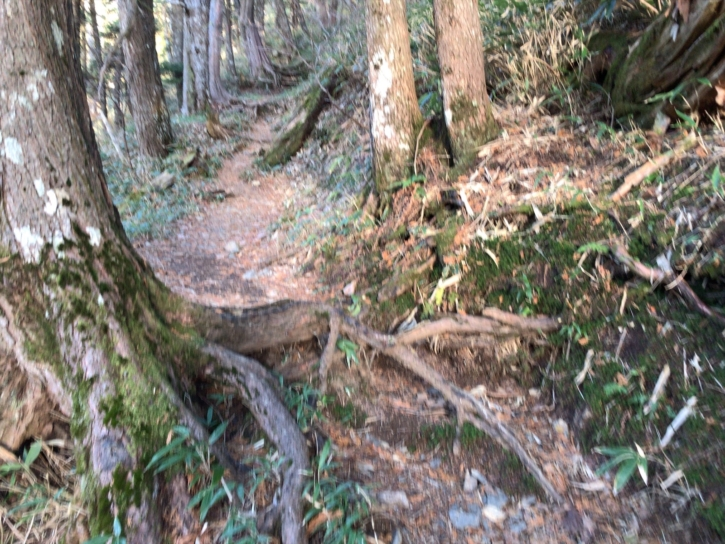 徳澤から蝶ケ岳の登山口の急登