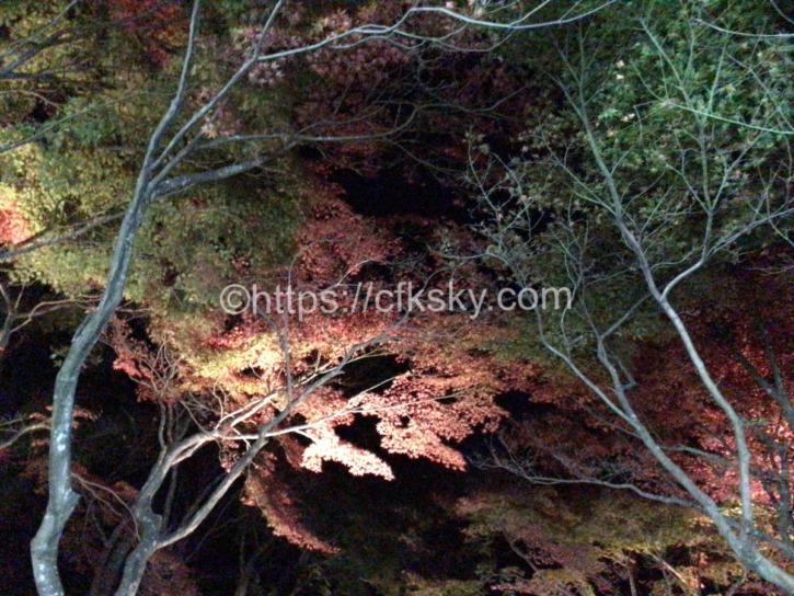 紅葉の筑波山へナイトハイク