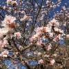 桜も満開のお風呂つき格安キャンプ場でキャンプと楽しんだナイトハイク