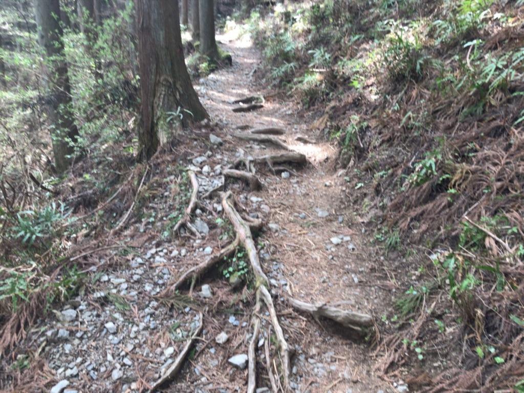 棒ノ折山・棒ノ嶺 の登山道