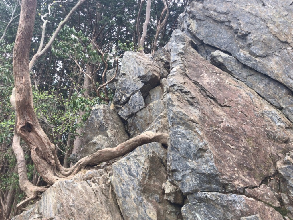 棒ノ折山登山の岩茸石を登る