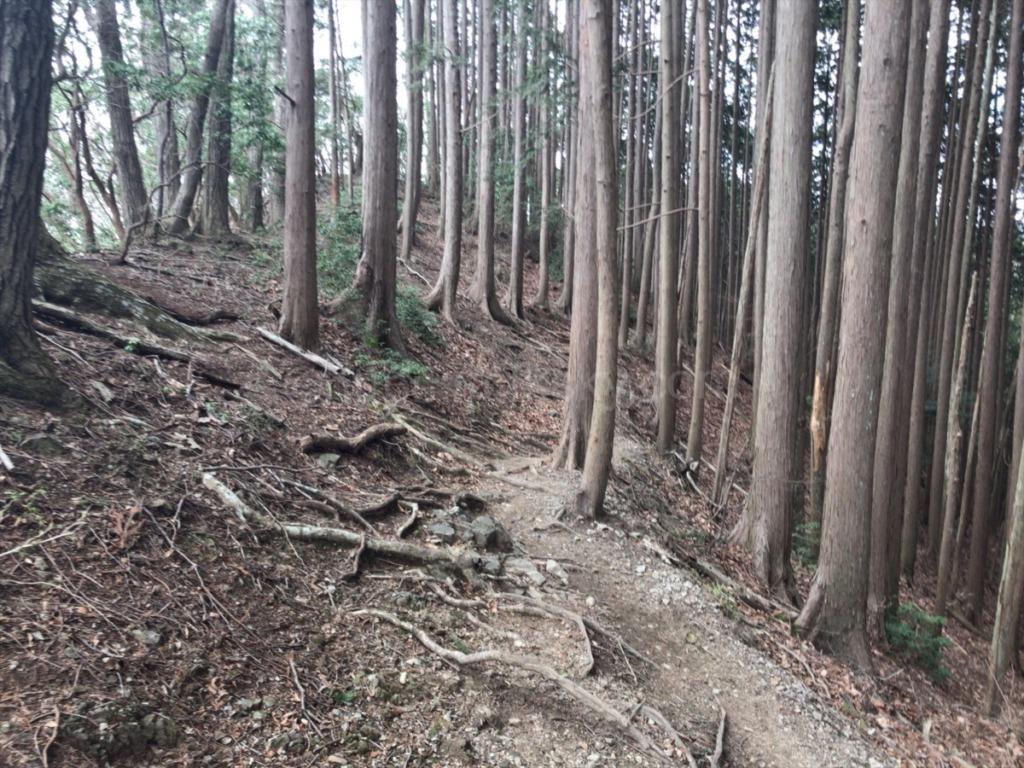 棒ノ折山登山道岩茸石からの下山コース