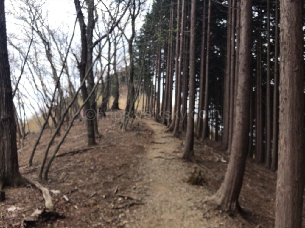 棒ノ折山・棒ノ嶺 登山からの下山コース